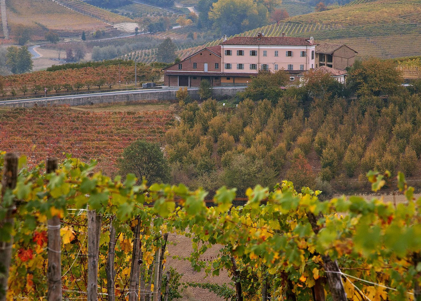 The Dolcetto d'Alba area