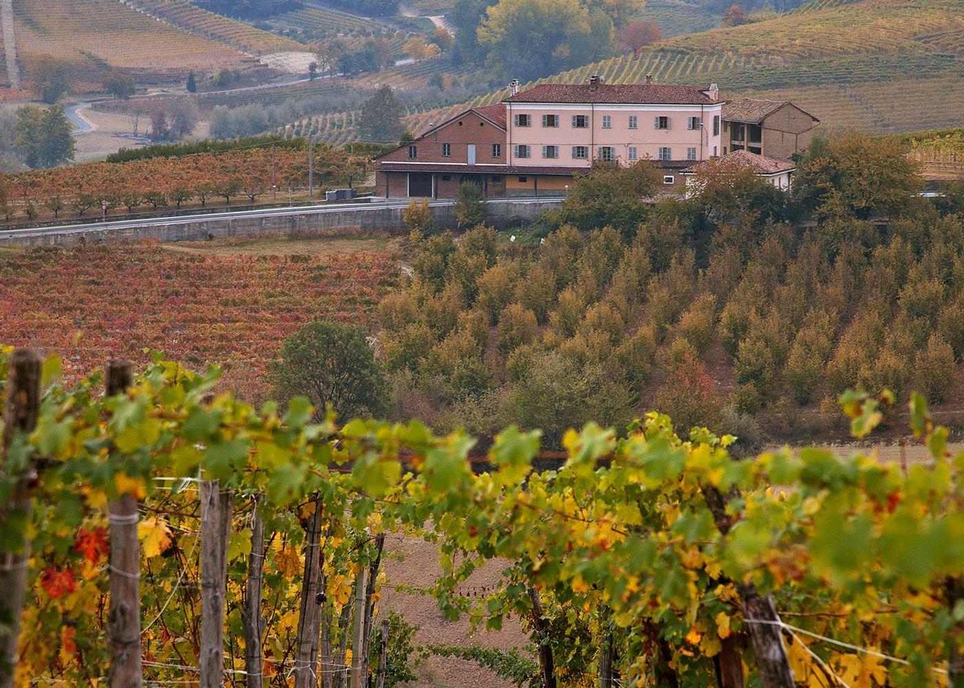 The Dolcetto d'Alba area