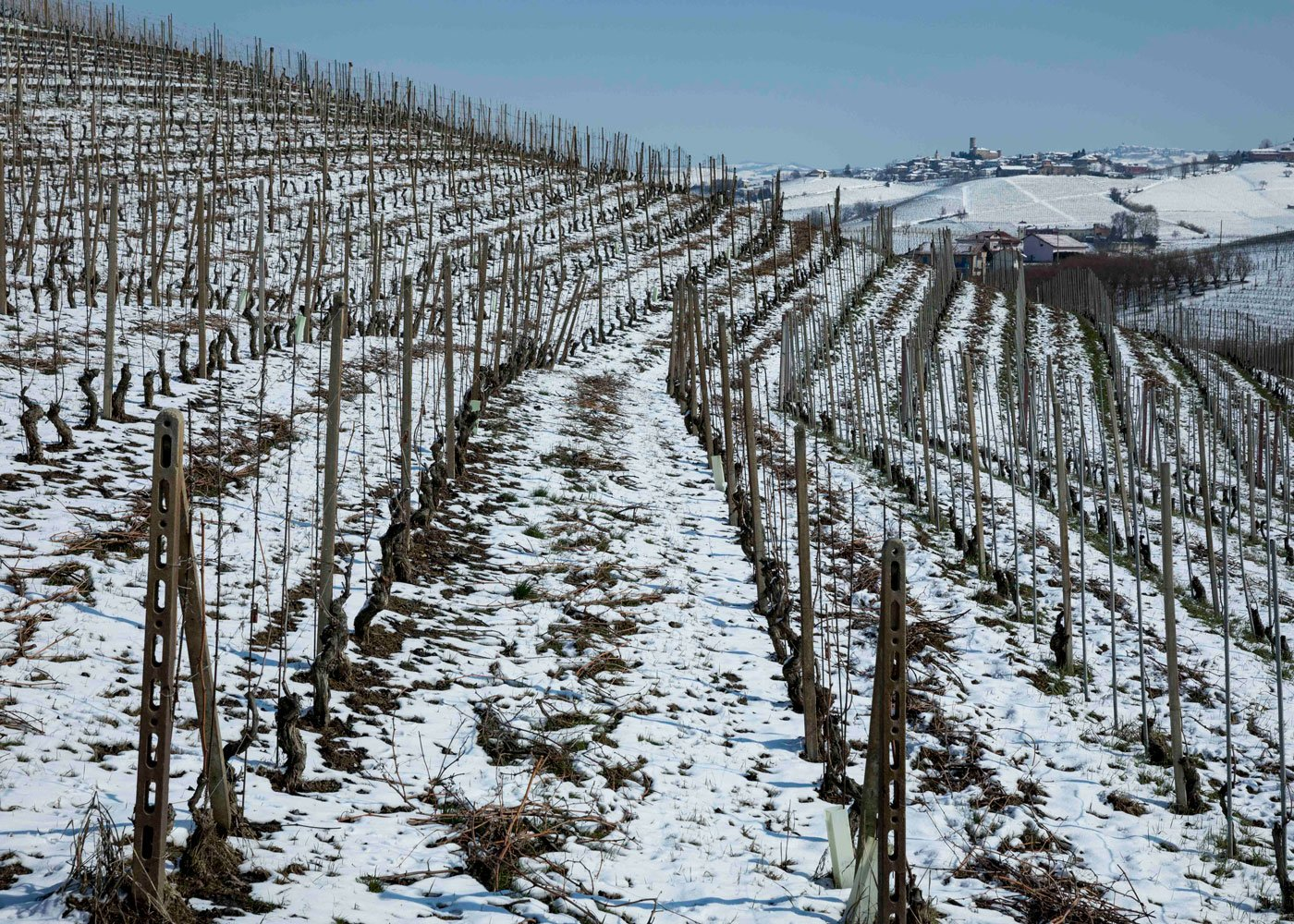The Nebbiolo vineyards in winter: Sarmassa