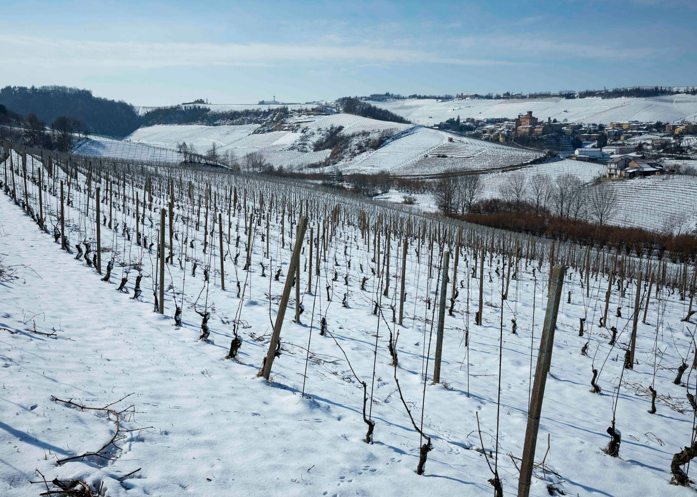 The Nebbiolo vineyards in winter: Vignane